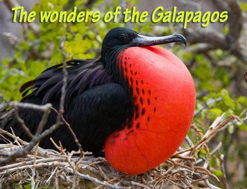 Galapagos Island cruising goes upscale