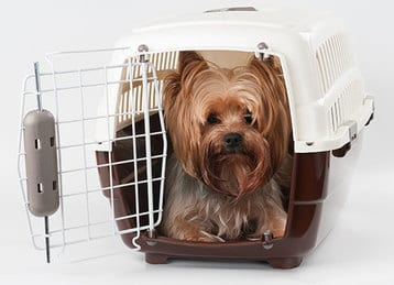 Tips for flying with pets